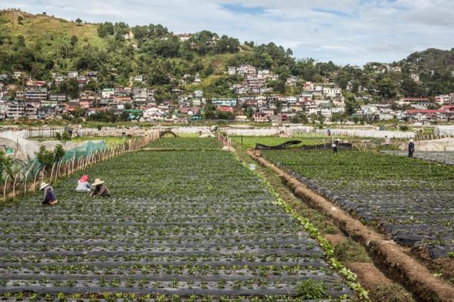 Baguio_La_Trinidad_jarconcengco_03
